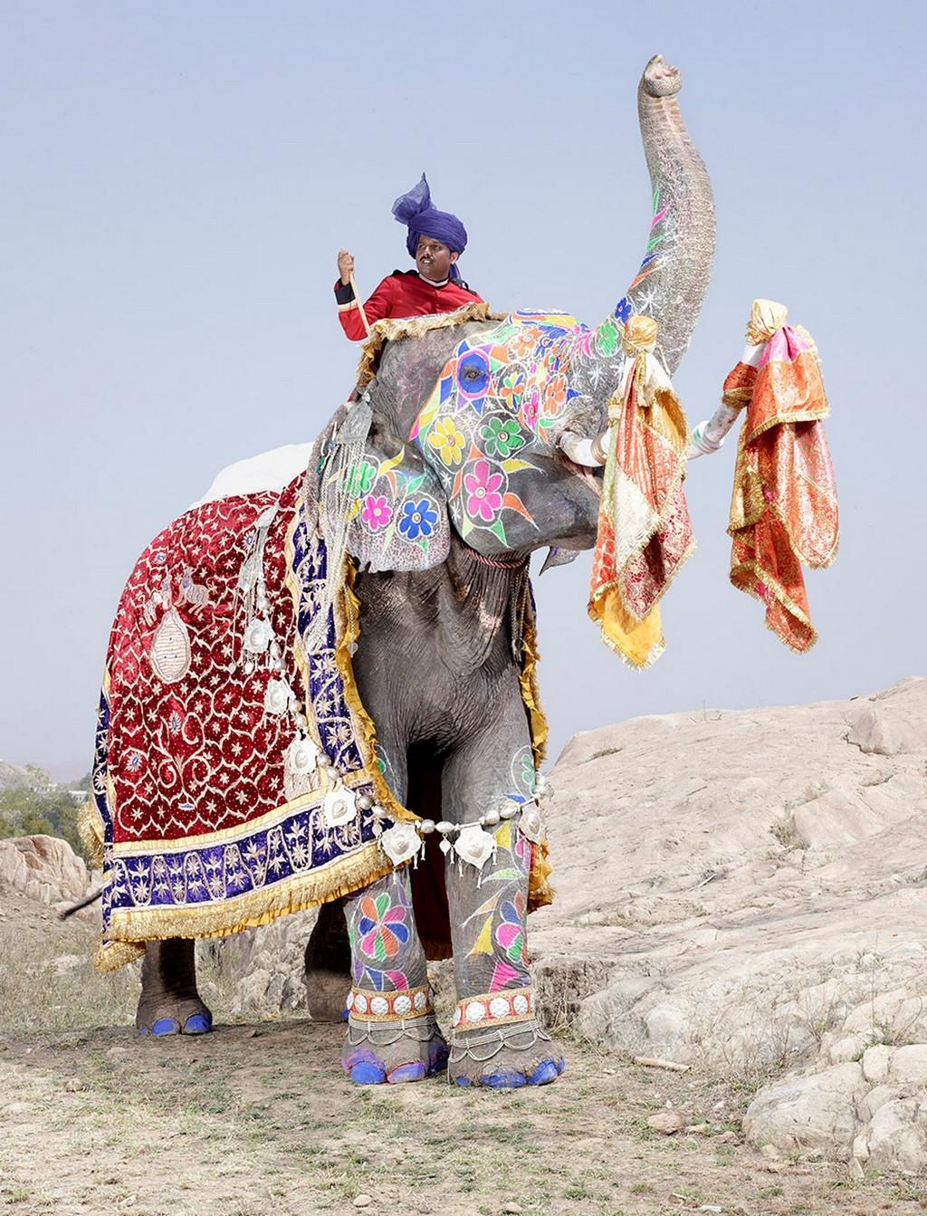 raspisnye slony 5