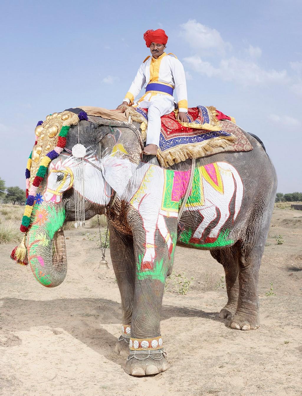 raspisnye slony 6