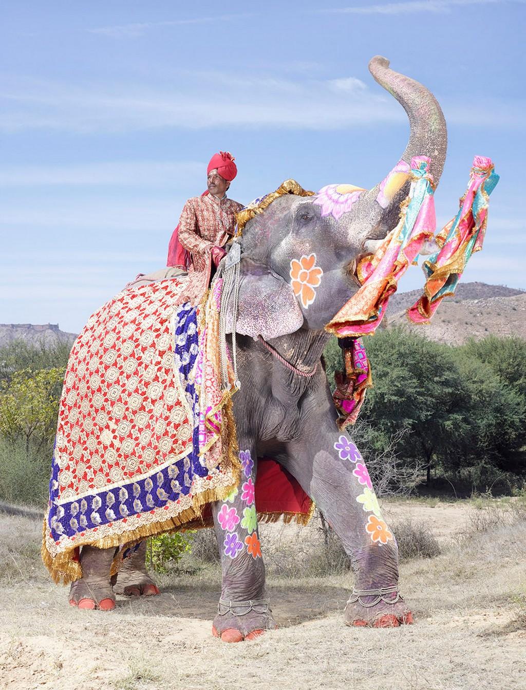 raspisnye slony 8
