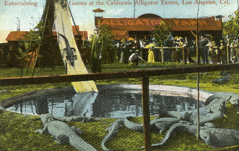 park alligatorov v Kalifornii 12