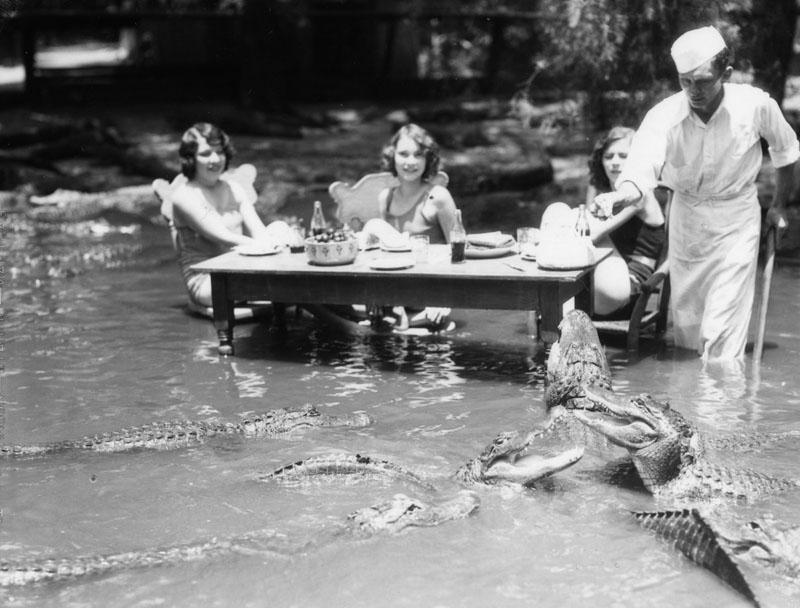 park alligatorov v Kalifornii 3
