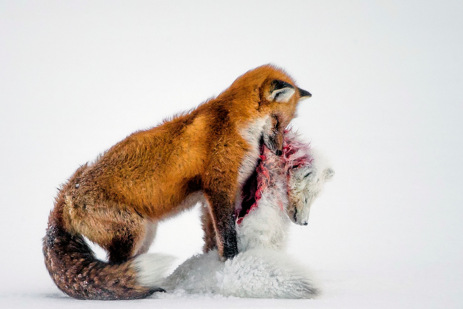 Pobediteli fotokonkursa Wild life Photographer of the Year 2015 1