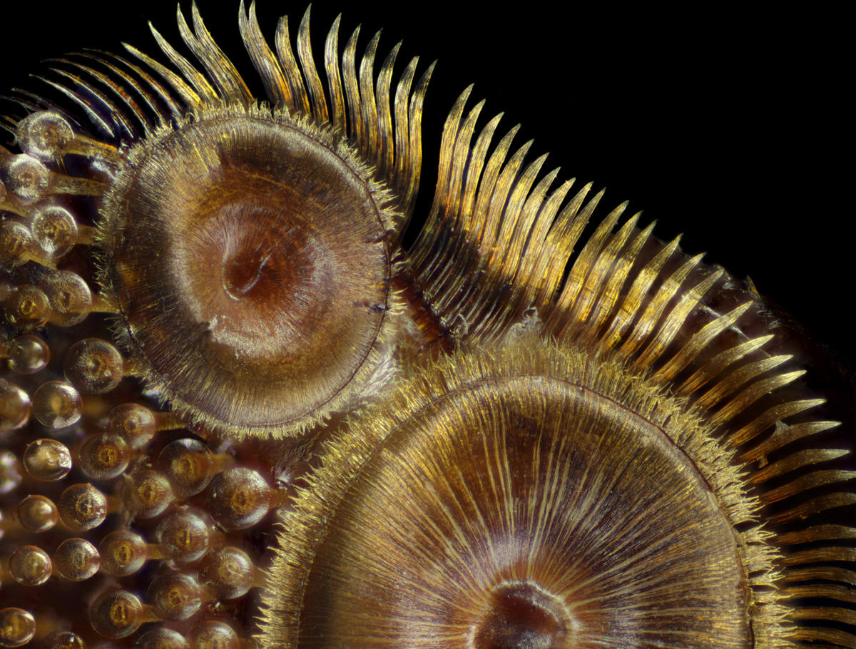 fotokonkurs Nikon Small World 2015 17
