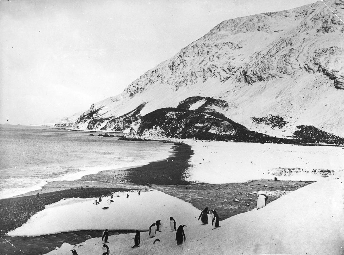 Fotografii Imperskoy transantarkticheskoy ekspeditsiey 46