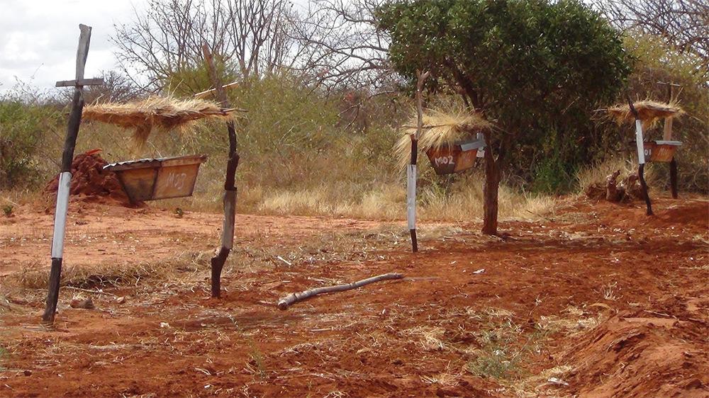 pchely zaschischayut fermerskie hozyaystva ot slonov v Afrike 3