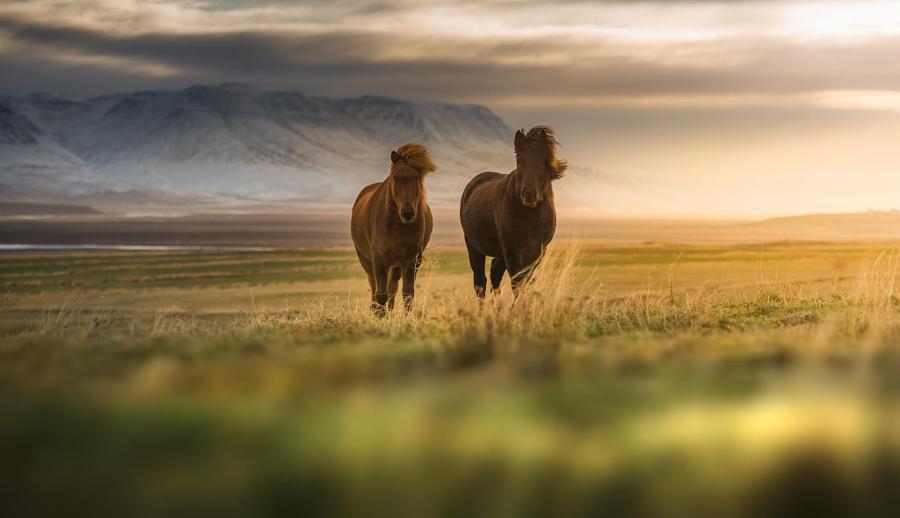 Фотографии лошадей – грация, краса и сила