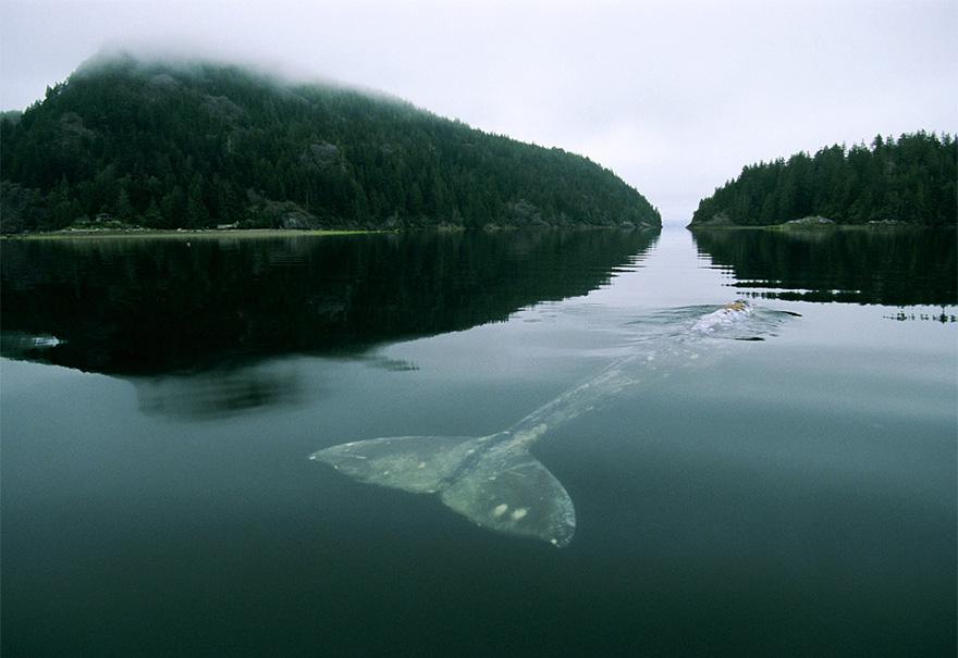 fotografii kitov 12