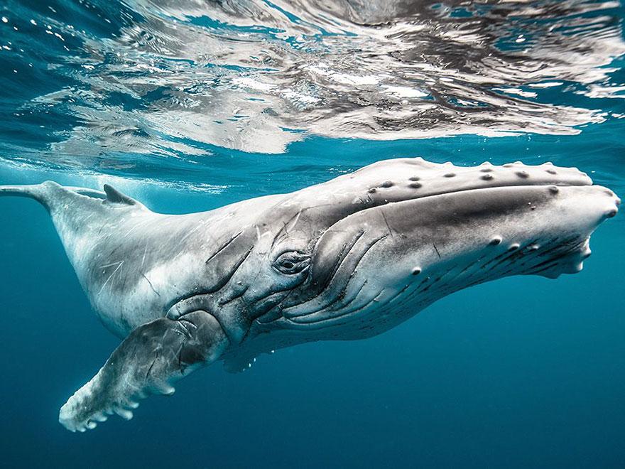 fotografii kitov 15