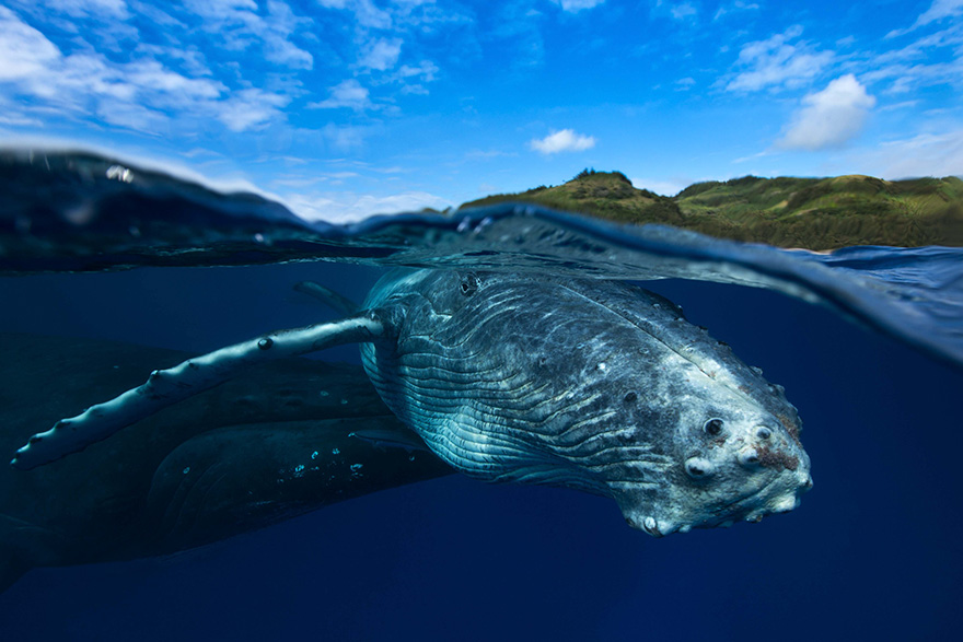fotografii kitov 17
