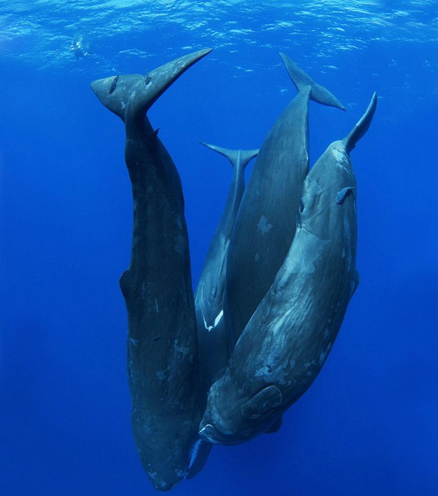 fotografii kitov 22
