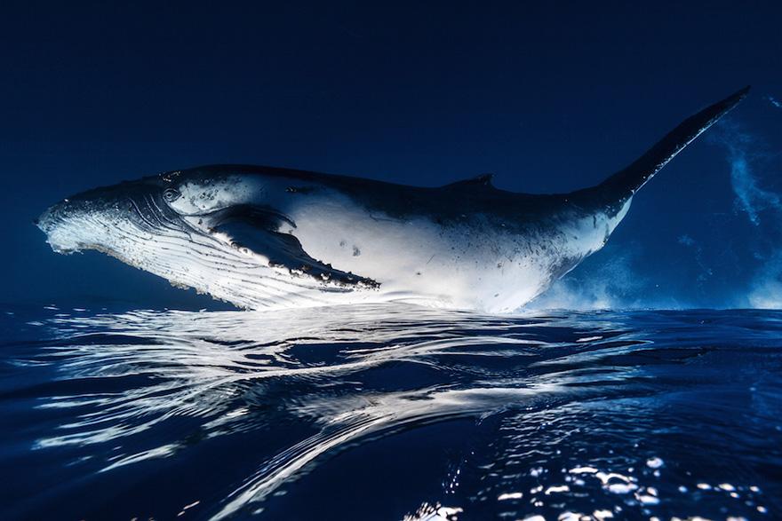 fotografii kitov 24