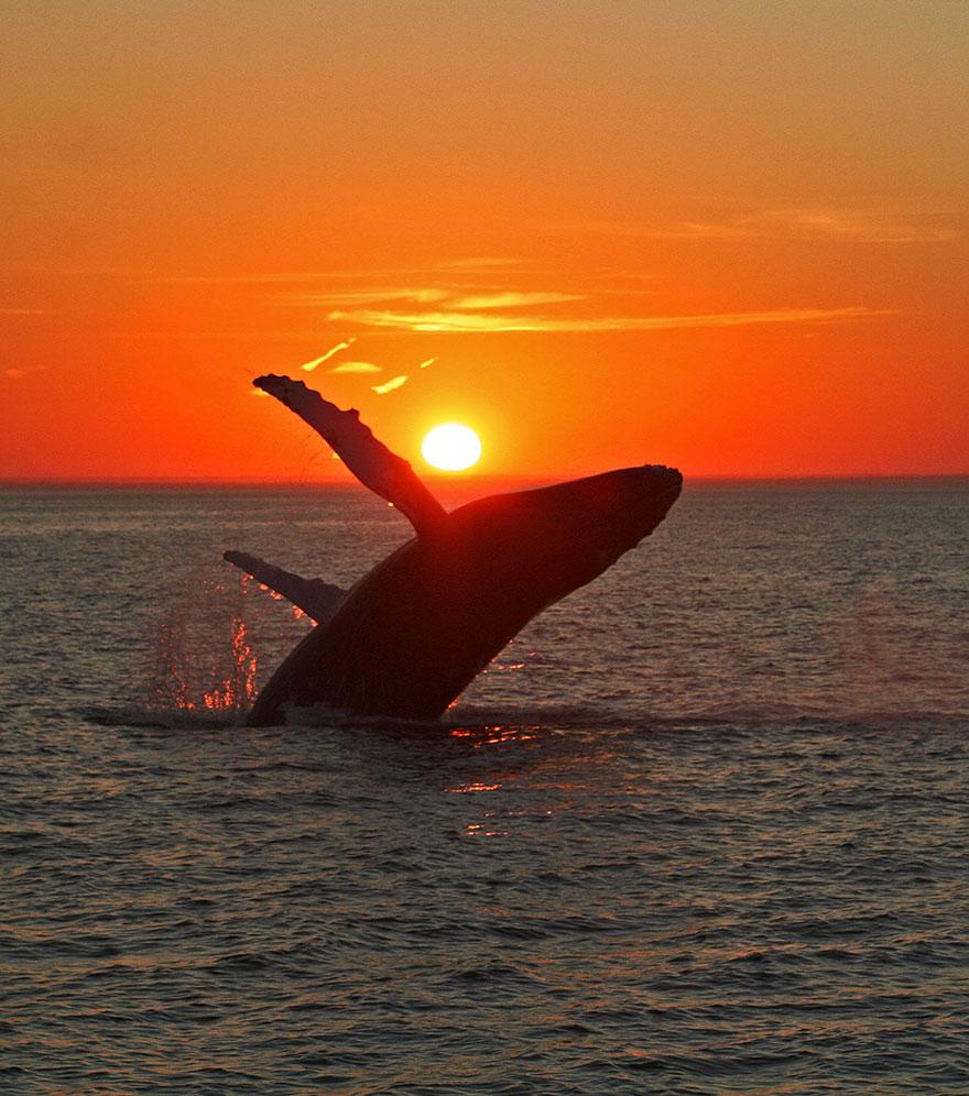 fotografii kitov 26