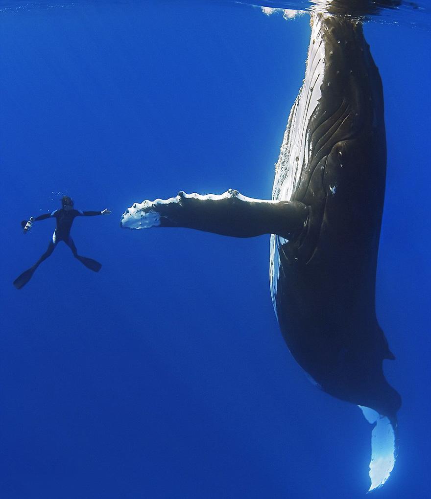 fotografii kitov 5