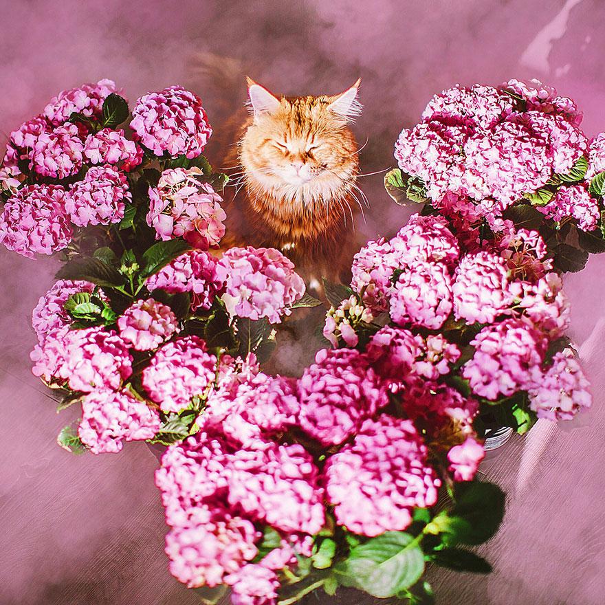 ryzhiy kot fotograf Kristina Makeeva 11