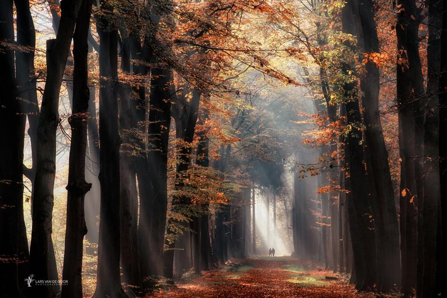 luchshie fotografii prirody 12