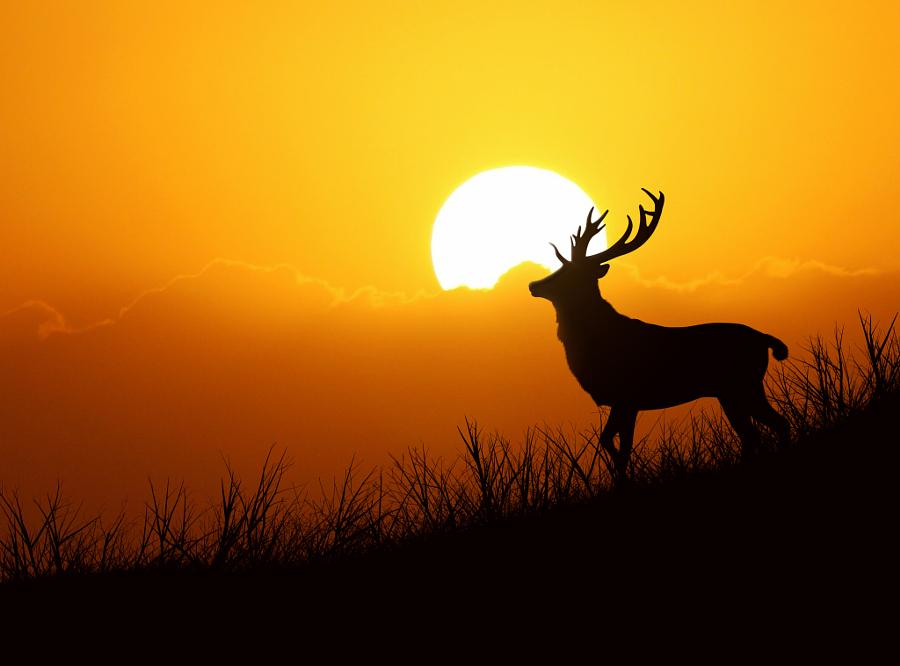 luchshie fotografii prirody 9