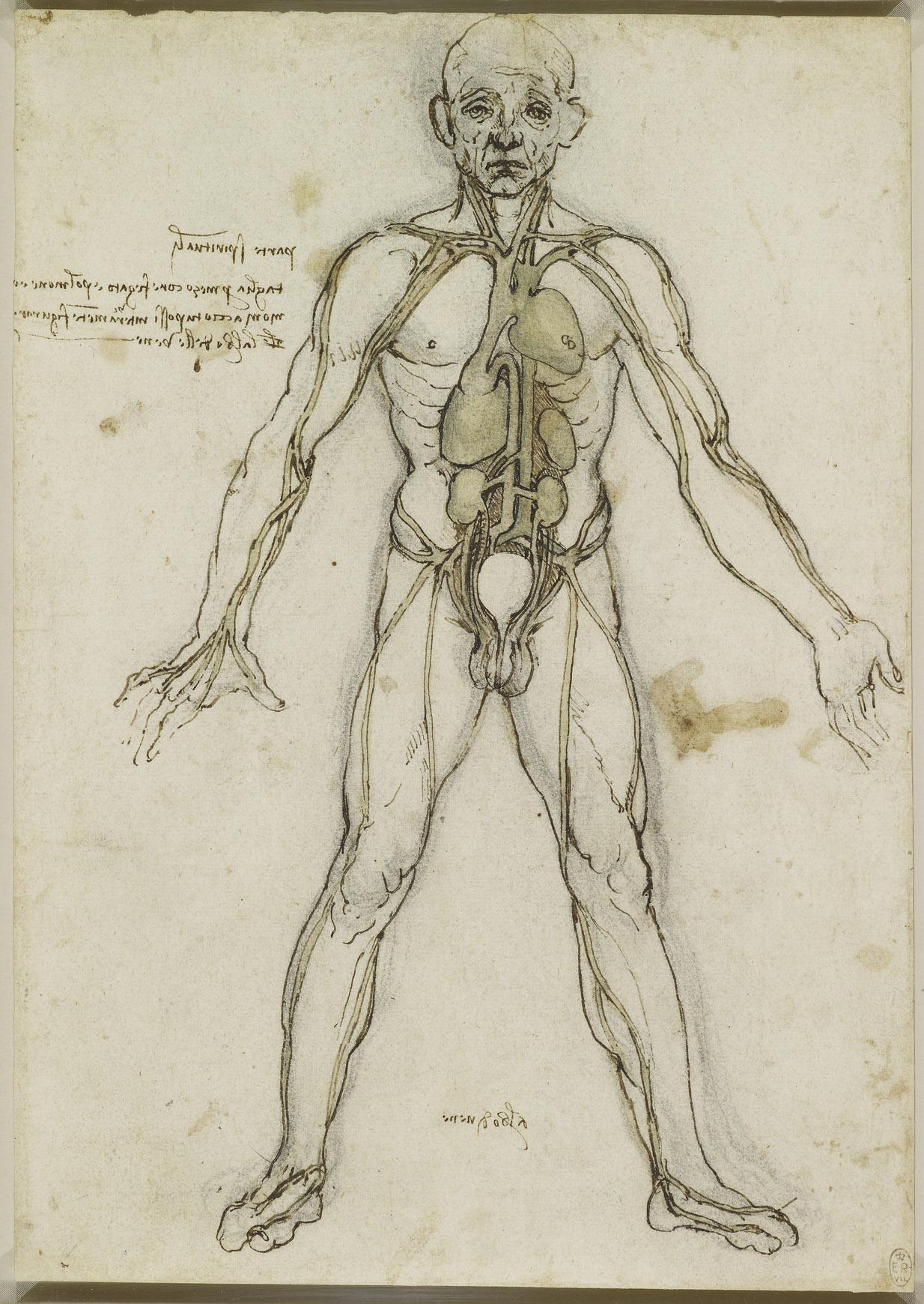 Großartig Leonardo Anatomie Zeichnungen Zeitgenössisch - Anatomie ...