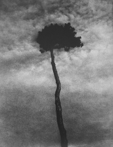 fotograf Edvard Dimsdeyl 11
