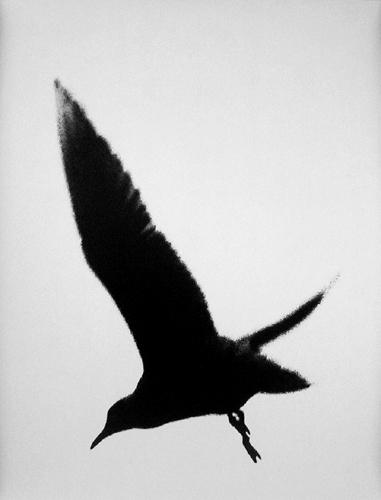 fotograf Edvard Dimsdeyl 34