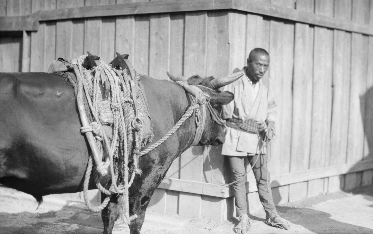 Yaponiya istoricheskie foto Arnold Dzhente 9