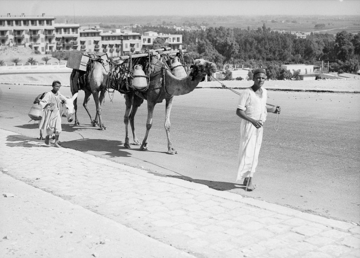 Istoricheskie fotografii Kaira 12