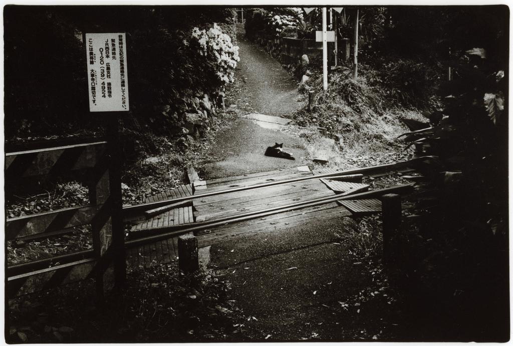 Токийский уличный фотограф Джунку Ниcимура 37
