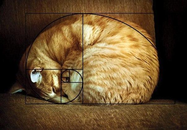 Zolotoe sechenie koty 1