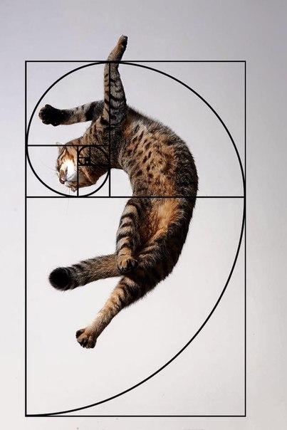 Zolotoe sechenie koty 2
