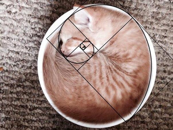 Zolotoe sechenie koty 5