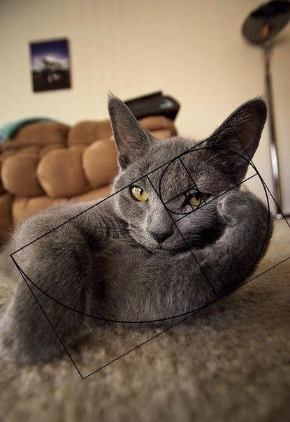 Zolotoe sechenie koty 6