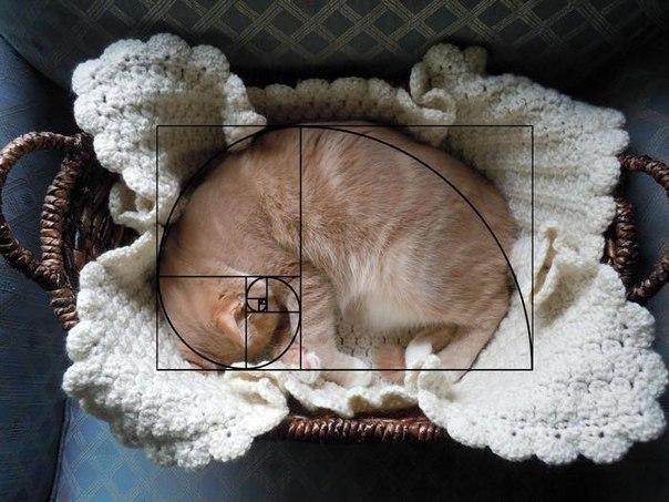 Zolotoe sechenie koty 7