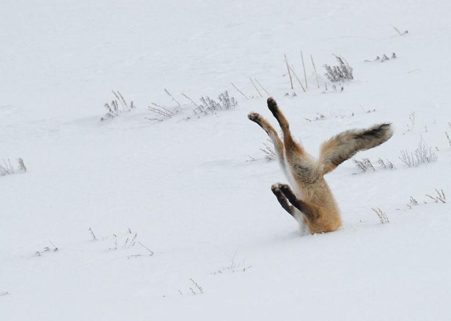 Смешные фотографии диких животных 1