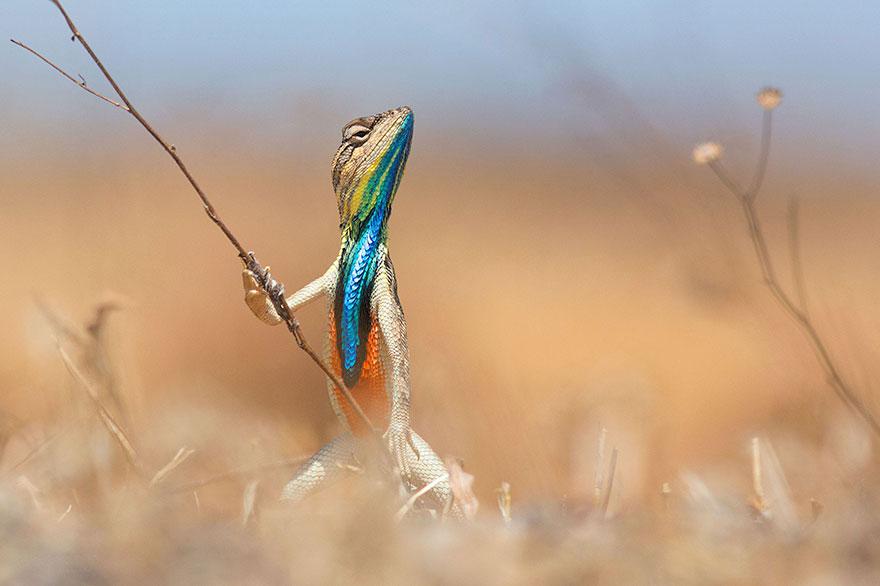 Смешные фотографии диких животных 12