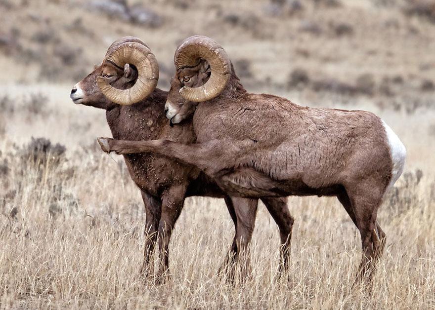 Смешные фотографии диких животных 14