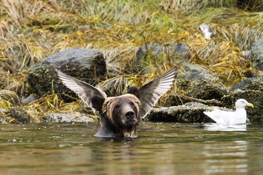 Смешные фотографии диких животных 2
