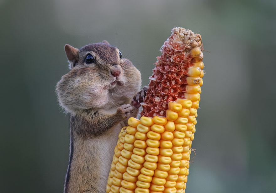 Смешные фотографии диких животных 24
