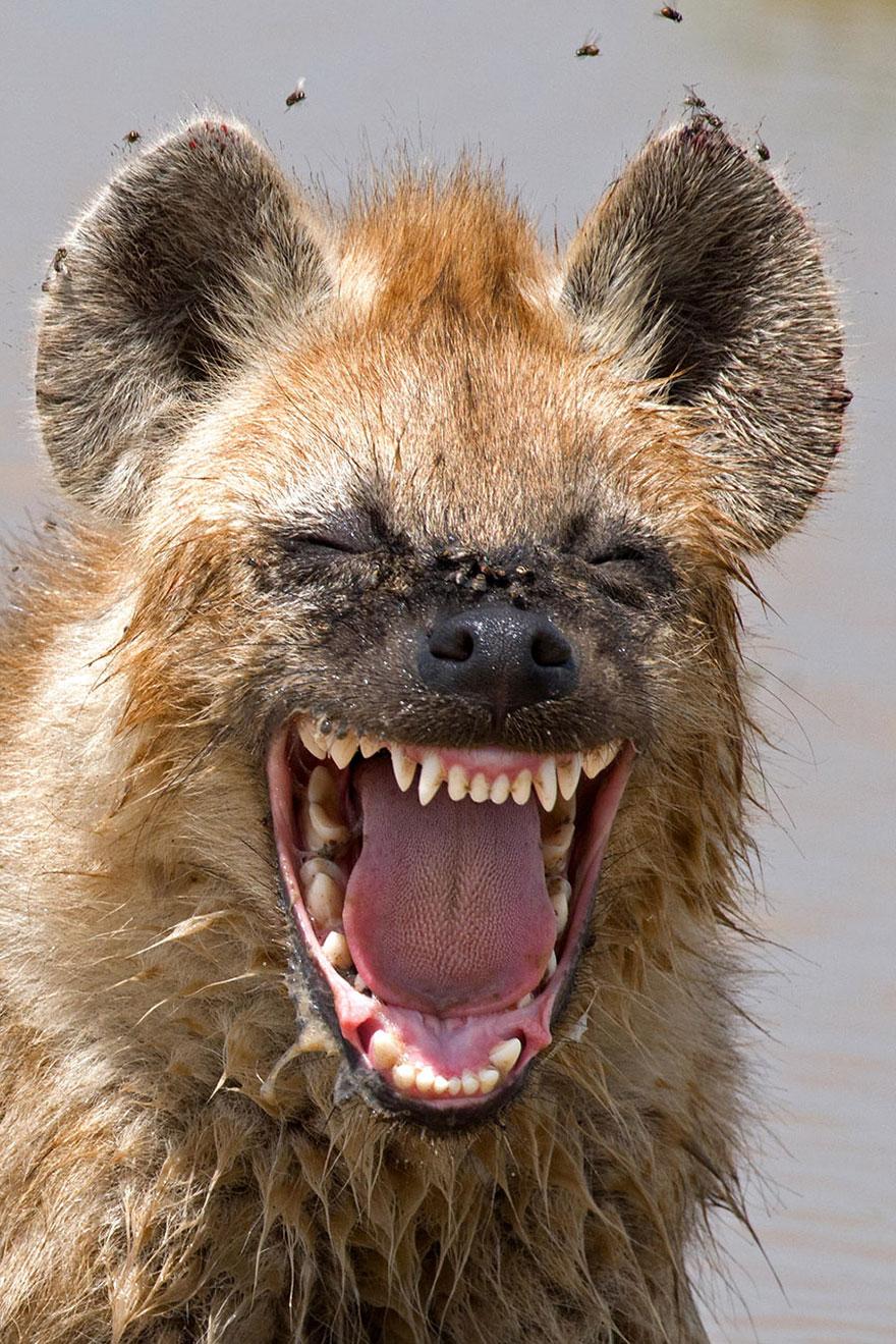Смешные фотографии диких животных 27