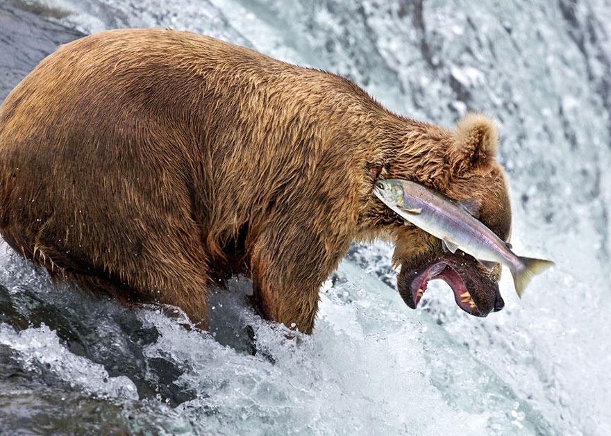 Смешные фотографии диких животных 32