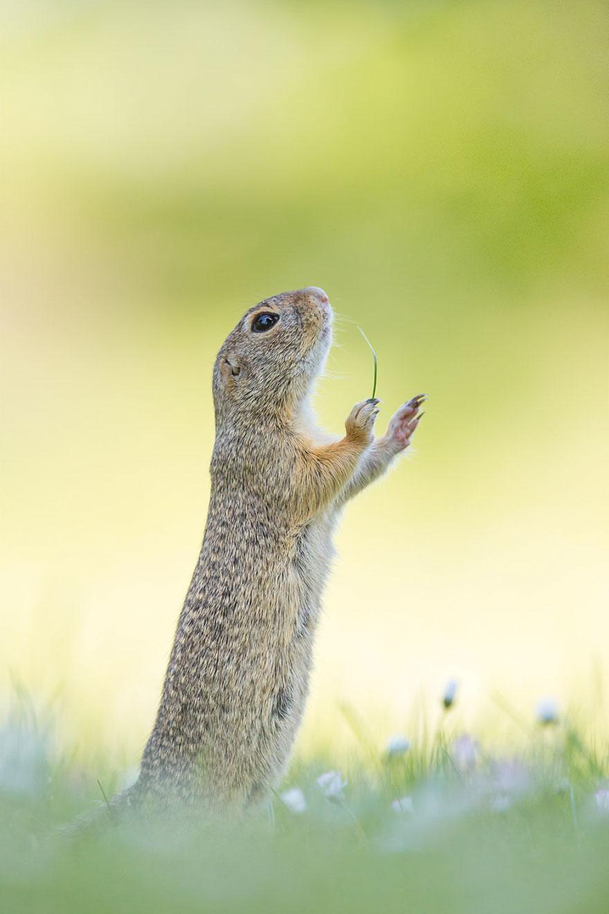 Смешные фотографии диких животных 6