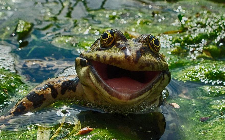 Смешные фотографии диких животных 7