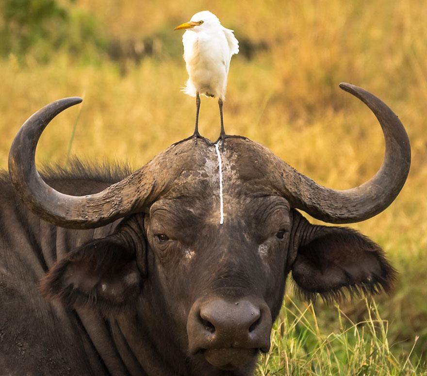 Смешные фотографии диких животных 8