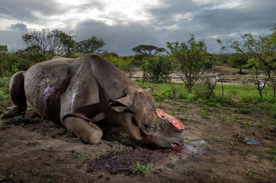 50 лучших фотографий года от National Geographic 17