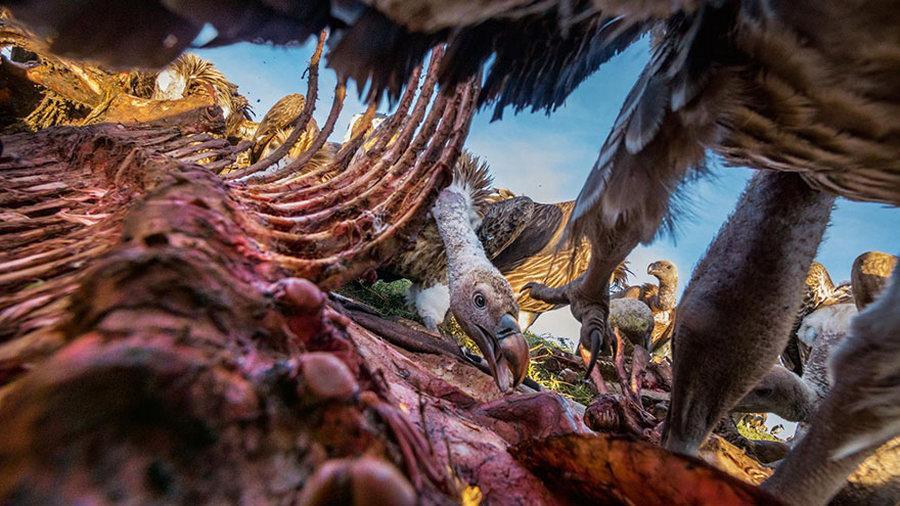 50 лучших фотографий года от National Geographic 34