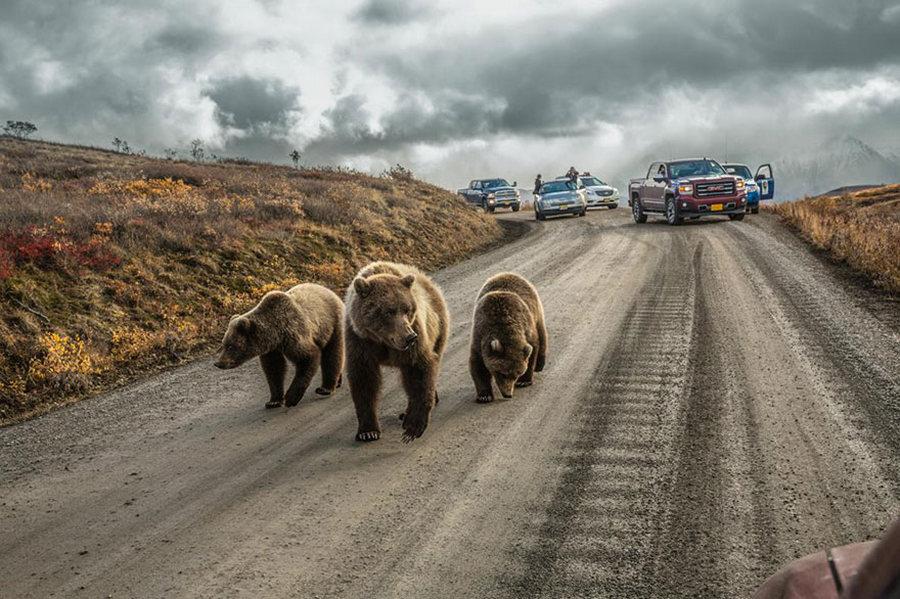 50 лучших фотографий года от National Geographic 10