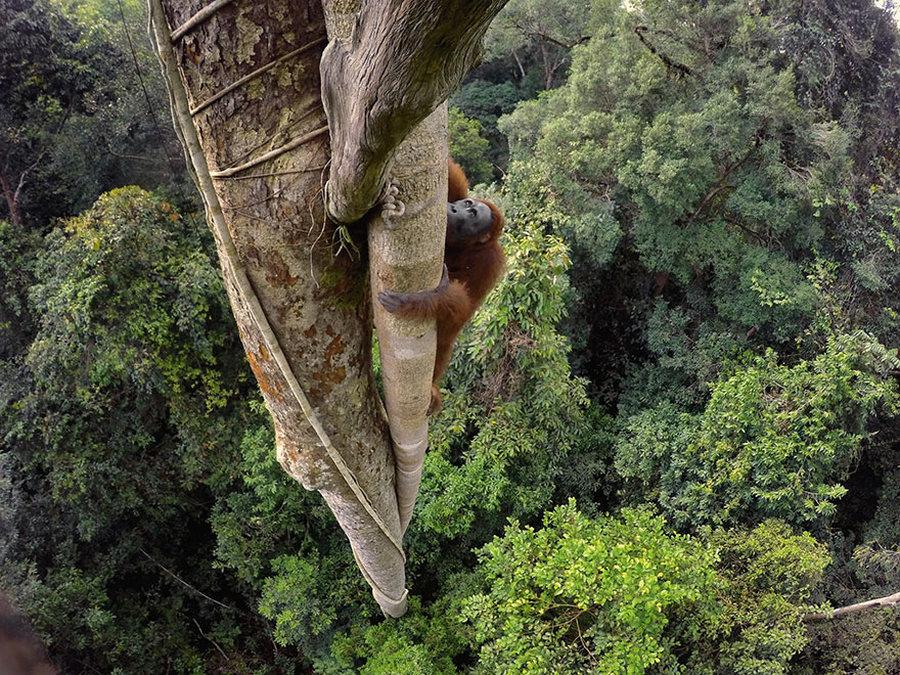50 лучших фотографий года от National Geographic 3