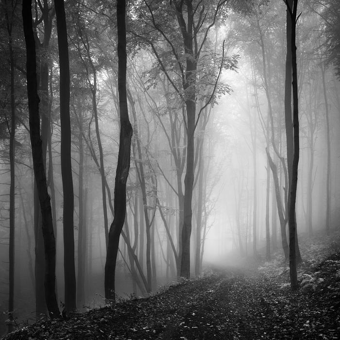 Пейзажные фотографии Даниел Жежиха 13
