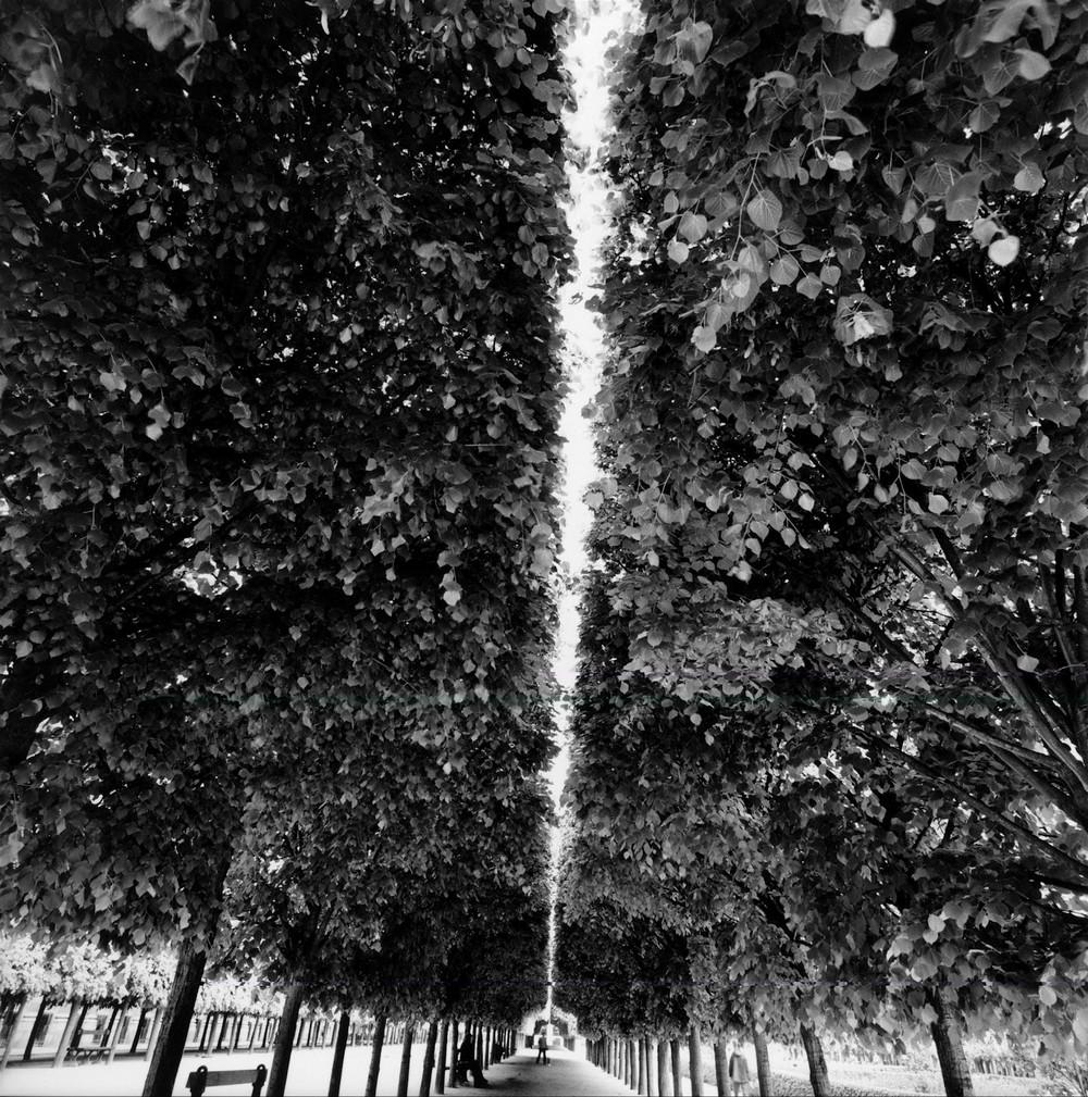 Фотограф-документалист Брюс Дэвидсон 10