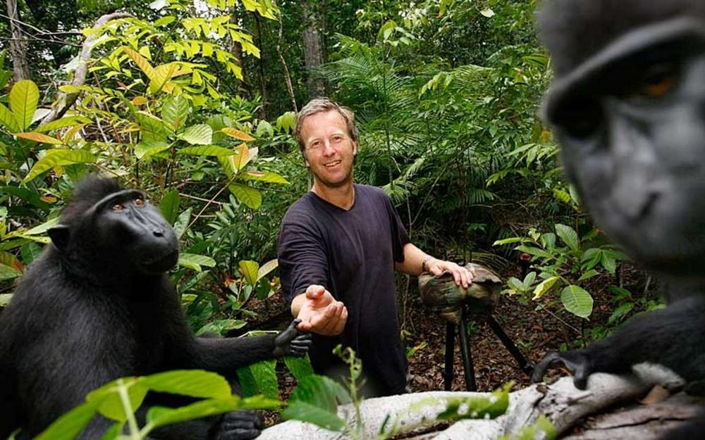 Фотограф Дэвид Слейтер разорился, судясь с обезьяной за авторское право на её снимок  3