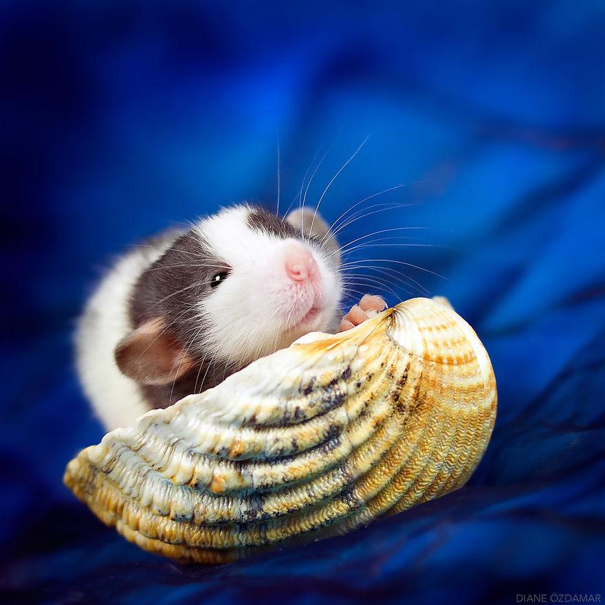 Фотографии домашних крыс Диана Оздамар 11