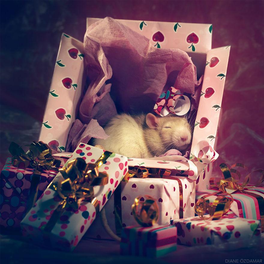 Фотографии домашних крыс Диана Оздамар 12